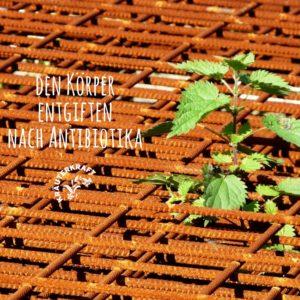 Ausleitung von Antibiotika