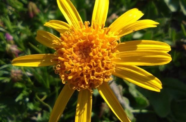 Sommersonnwende – Die Kraft der Sonne