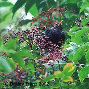 Schlaue Vögel