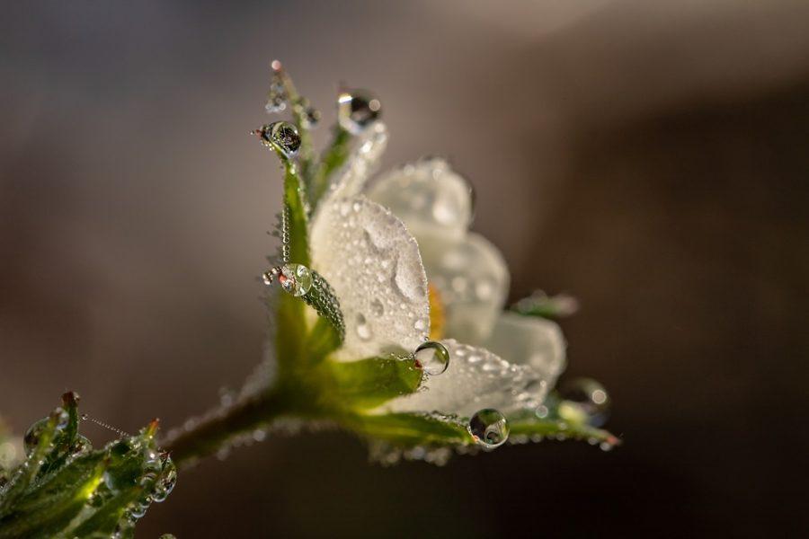 Blütenessenzen- die subtile Kraft der Pflanze