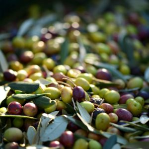 So gesund ist die Olive!