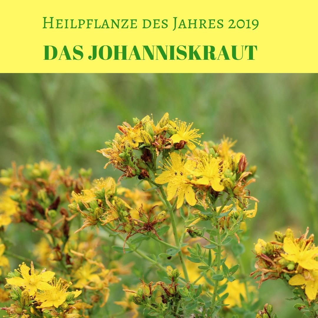 Heilkraut des Jahres 2019