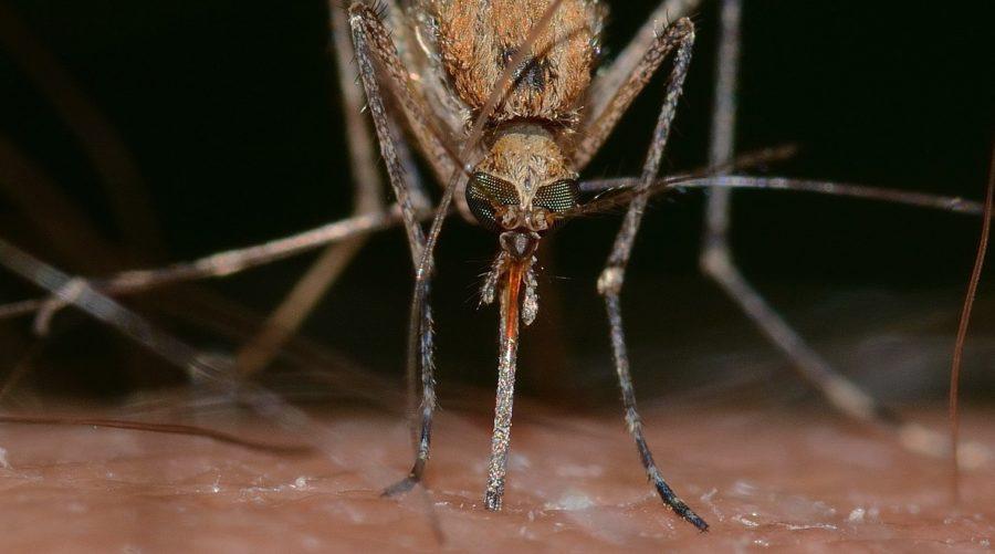 Le zanzare non amano gli oli essenziali!