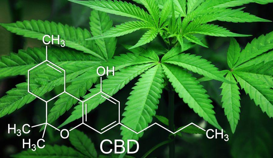 CBD – Wundermittel Hanfpflanze?