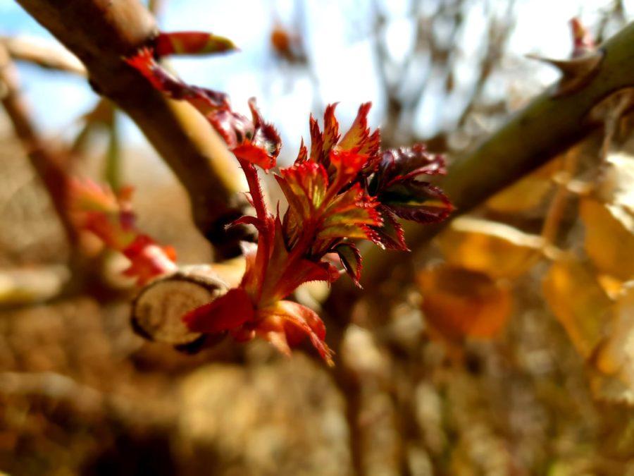 Wochenendtipp: Genießt das Frühlingserwachen